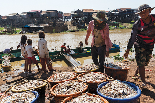 A haul of fish being loaded in Kampong Khleang.