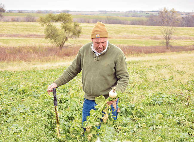 As we walk his land, Watkins pulls up a daikon radish that he planted two months prior on his land. Watkins has implemented several sustainable agriculture practices on his farm in the last 20 years, including planting cover crops and strips of native prairie, fencing ponds, and grazing his cattle year-round.
